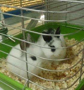 Кролик декоративный🐰