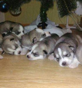 Подарок на год собаки!