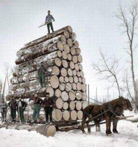 Приму порубки на дрова