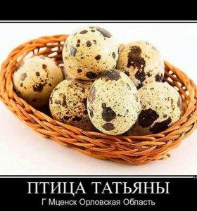 Яйцо перепелов техасов