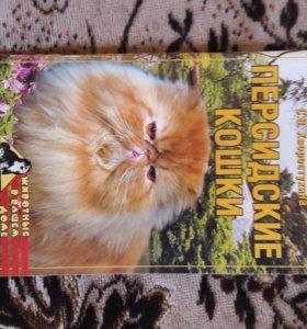 Персидские кошки. С.В.Хворостухина