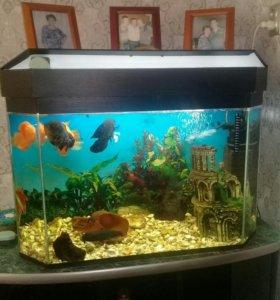Аквариум с рыбками+тумба и верхняя полка