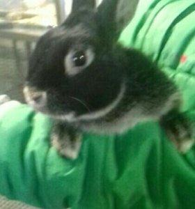 Продаются!декоративные кролики