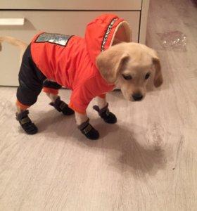Новый комбинезон одежда для собак