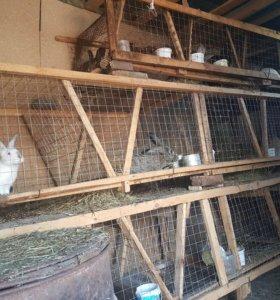 Кролики срочно