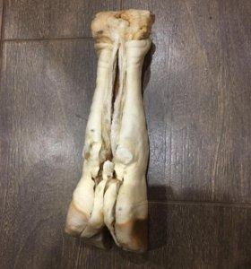 Лакомство для собак крупных пород)