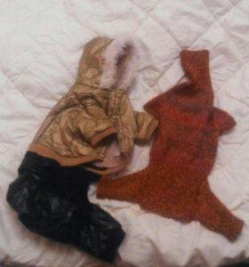 Теплый костюм на синтепоне+вязанный,намордник