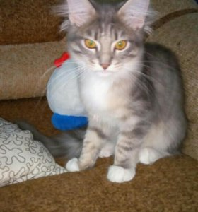 Кошечка 5 месяцев.
