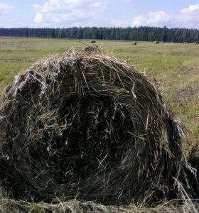 Участок, 250000 сот., сельхоз (снт или днп)