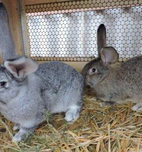 Кролики и мясо кроликов