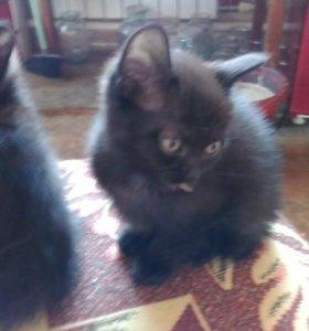 Котята ищут любящий дом