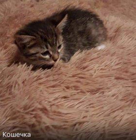 Кошечки и котики