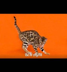 Предлагаю к резервированию мини леопардов