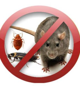 Уничтожение тараканов клещей клопов грызунов запах
