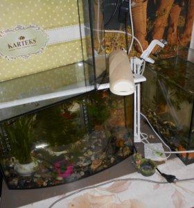 Аквариумы 45-30-20 л. рыбки растения цена разная
