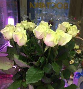Цветы розы белоснежные розы спб