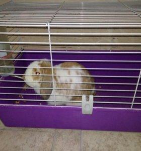 Кролик+ клетка