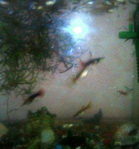 Прийму в дар аквариум на 30,50 литров можно с рыбк