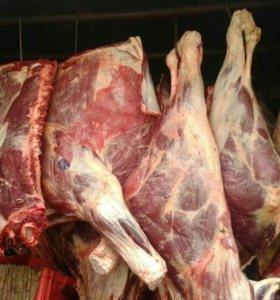 Свежее говяжье мясо