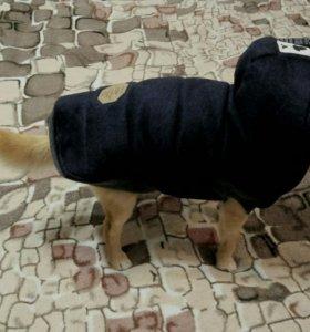 Зимнея одежда для собак