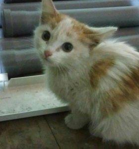 Котенок ищет хозяйна