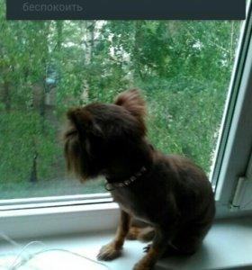 Рубец для собак