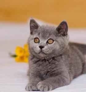 котята из питомника