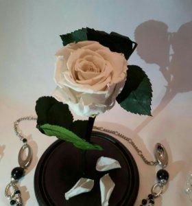 Роза в стекляной колбе