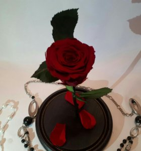 Роза в колбе XL размер