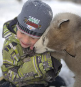 щенки аляскинский маламут