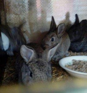 Крольчики