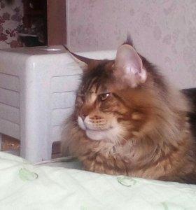 Кот вязка Брутальный мачо