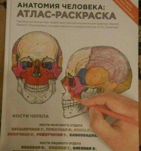 Анатомия атлас раскраска