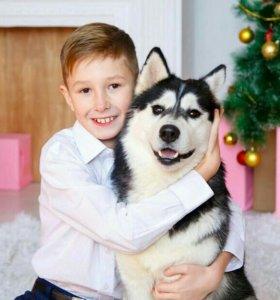 фото с  шикарными собаками