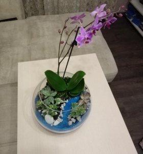 Флорариум  на заказ