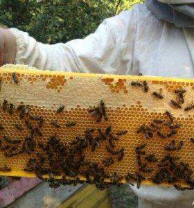 Пчёлы и пчелопакеты