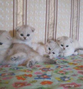 Драгоценные котята