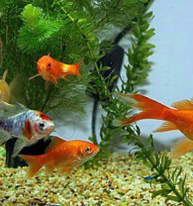 Ремонт аквариумов