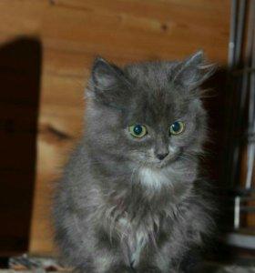 Котенок в дар, котенок в добрые руки