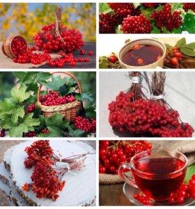 Калина красная ягода сушенная