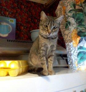выбирайте!!! 4 кошки красавицы