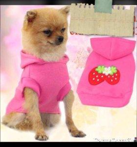 Одежда для собак и кошек (РАСПРОДАЖА!)