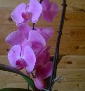Орхидейки после цветения/обмен