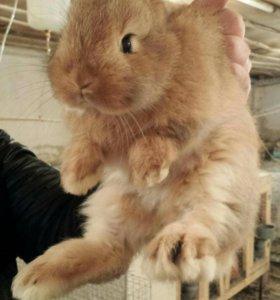 Кролики на продажу