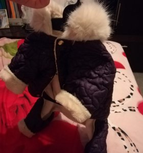 Одежда и переноска для собаки