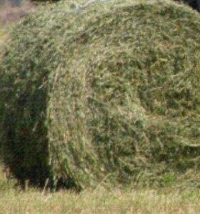 Рулоны сена (люцерны)