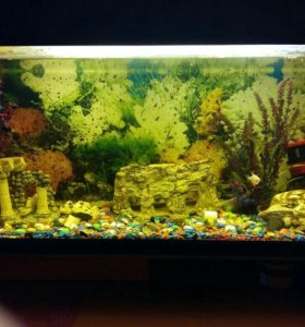 Срочно продам аквариум с рыбками ,на 80 лит.