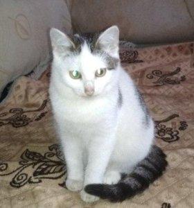 кот-мышелов полгода
