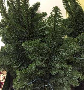 Большие ветки нобилиса голубой елки