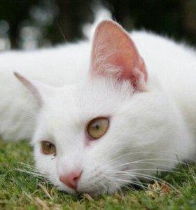 2 кота